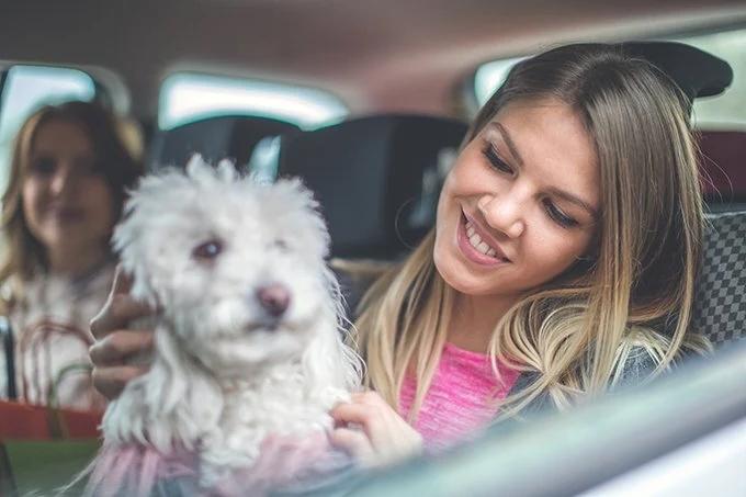 Taxi mascotas Getafe